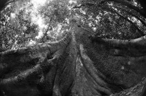 ¿Dónde están los árboles que oxigenaban el ambiente? Han sido reemplazados por enormes edificios de cemento y concreto que no nos dejan respirar. Foto: EFE.